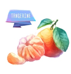 Tangerine hand drawn watercolor on a white vector
