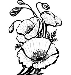 Sketch of poppy flowers vector