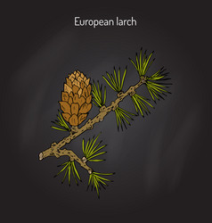 Larch cone and branch vector
