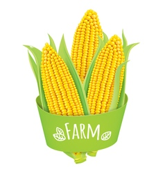 Farm corn vector image