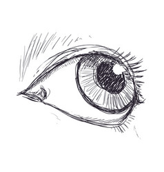 Eyes drawing sketch vector