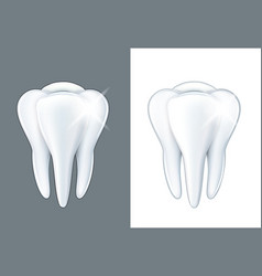 object tooth vector image vector image