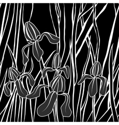 Graphic stylized image of iris flower vector
