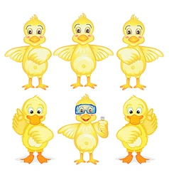 Six ducklings vector image
