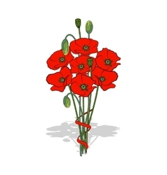Bouquet of red poppies tied with a ribbon vector
