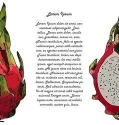 Dragon fruit or pitahaya with text vector