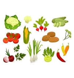 Farm vegetables isolated flat icons vector image
