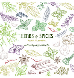 frame composed of hand drawn herbs and spices vector image vector image