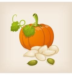 Pumpkin and pumpkin seeds vector image vector image