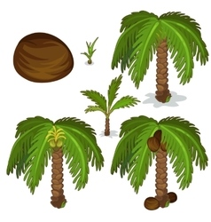 Planting and cultivation of coconut palm vector