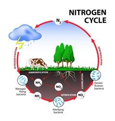 nitrogen cycle vector image