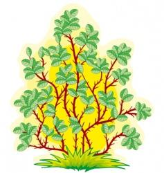 bush vector image