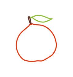 citric orange fruit vector image vector image