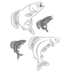 fish grayling vector image vector image