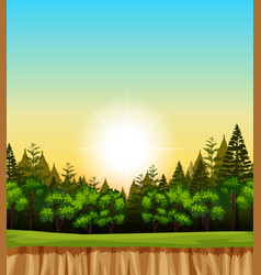 forest scene with trees on the cliff vector image vector image