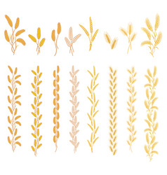 Ripe ears of cereal plants vector