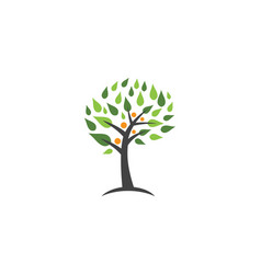 family tree symbol icon logo design template vector image