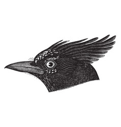 Long crested jay vintage vector