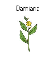 Damiana turnera diffusa  medicinal plant vector