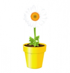 Chamomile in pot vector