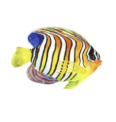 Watercolor tropic striped fish vector