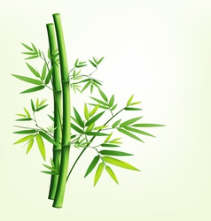 Bamboo green vector image