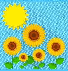 flat style sunflower vector image vector image