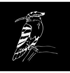 Hand-drawn pencil graphics hoopoe hornbill bird vector