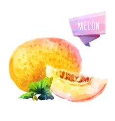Melon hand drawn watercolor on a white background vector image