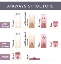 Airways structure vector image vector image