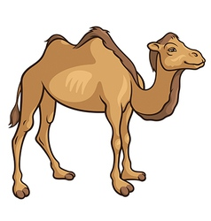 Camel 2 vector image vector image