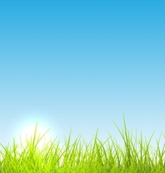 Green fresh grass and blue sky summer background vector