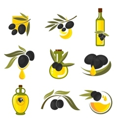 Spanish black olive fruits and oil bottles icons vector
