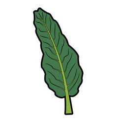Nature leave foliage botanical image isolated on vector