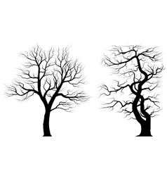Silhouettes of old huge trees over white vector image