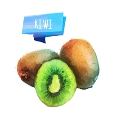 Kiwi hand drawn watercolor on a white background vector