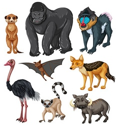 Different kind of wild animals vector