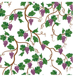 Floral pattern with grape branch wineyard vector