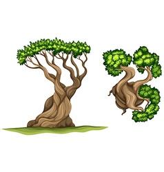 Bristlecone pine tree vector image vector image