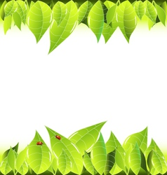 Leaves and ladybugs frame background vector image