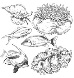 Reef animals set vector