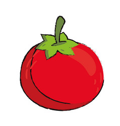 Tomato food diet healthy vector