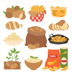 Vegetable potato products vector
