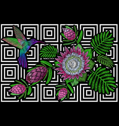 hummingbird around flower protea exotic tropical vector image