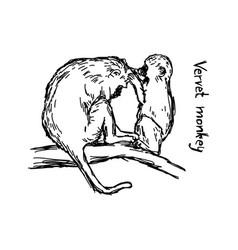 Vervet monkey family - sketch hand vector