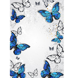 Frame with butterflies morpho vector