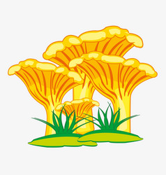 Edible mushroom chanterelle vector