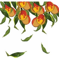 Fresh growing peaches vector