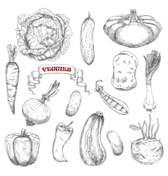 Sketches of isolated farm vegetables vector image vector image