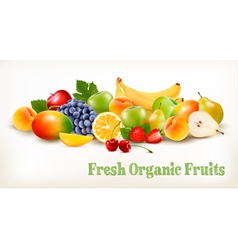 Fresh organic fruits and berries isolated on white vector